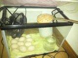 自作孵卵器の作り方